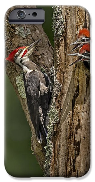Pilated Woodpecker Family iPhone Case by Susan Candelario
