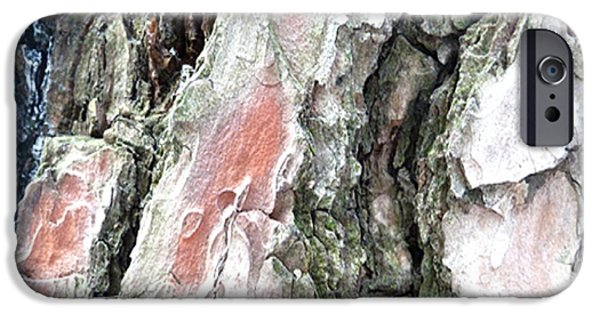 Pines Pyrography iPhone Cases - Pine bark study 2 - photograph by Giada Rossi iPhone Case by Giada Rossi