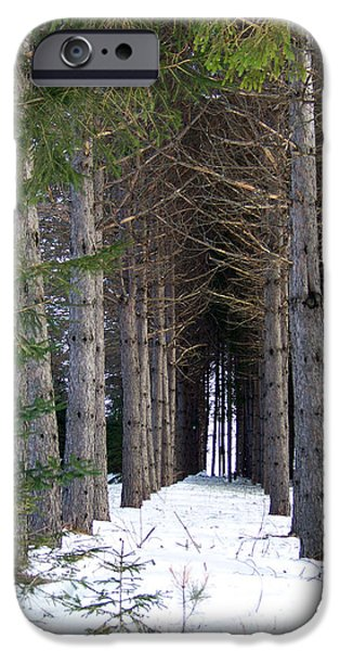 Winter In Maine iPhone Cases - Pine Cathedral iPhone Case by William Tasker