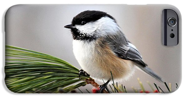 Animals Photographs iPhone Cases - Pine Chickadee iPhone Case by Christina Rollo