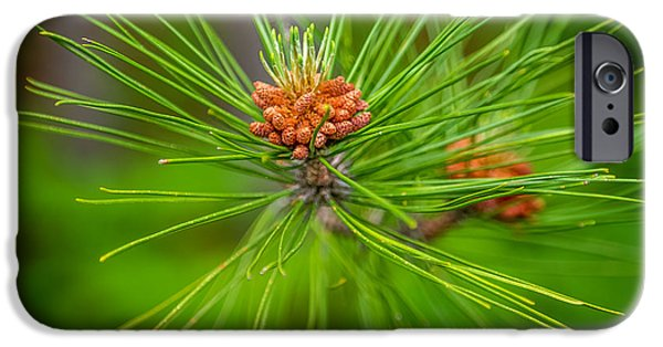 Inexpensive iPhone Cases - Pine cone iPhone Case by Paul Freidlund