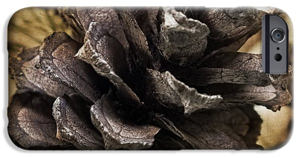 Artography Photographs iPhone Cases - Pine Cone Right iPhone Case by Melissa Bittinger