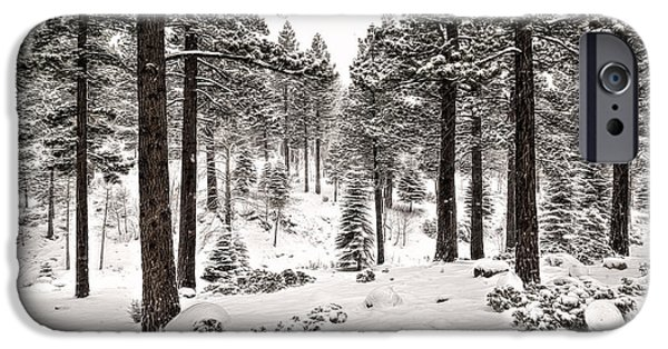 Snowy Day iPhone Cases - Pine Forest iPhone Case by Maria Coulson