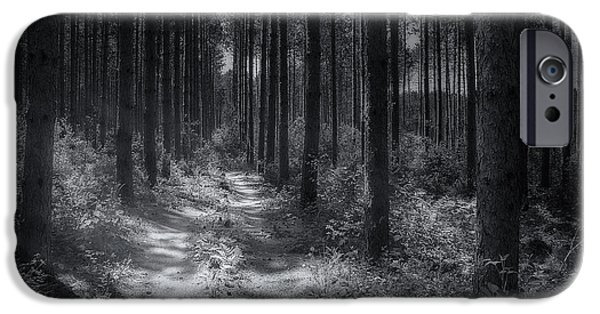 Walk Paths iPhone Cases - Pine Grove iPhone Case by Scott Norris