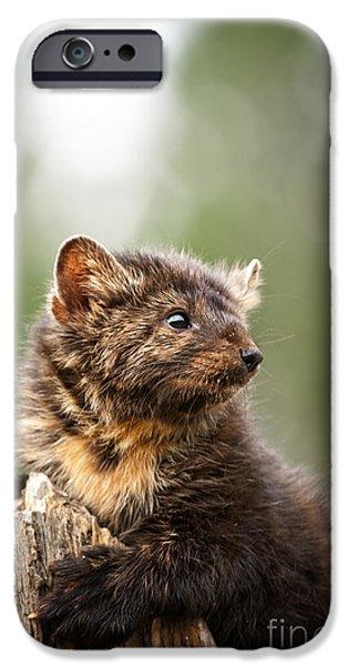 Animals iPhone Cases - Pine Marten-animals-image iPhone Case by Wildlife Fine Art