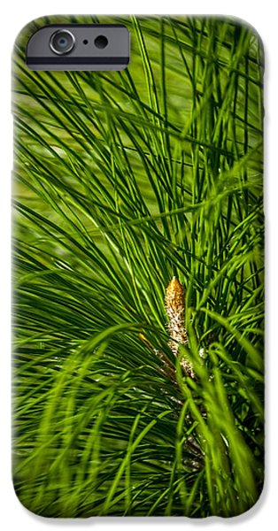 Pines Photographs iPhone Cases - Pine Needles iPhone Case by Marvin Spates