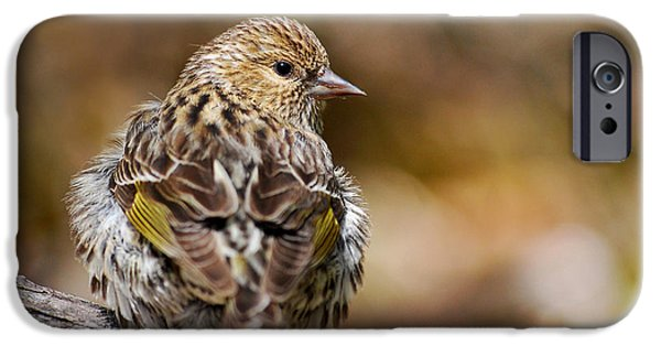 Finch iPhone Cases - Pine Siskin iPhone Case by Christina Rollo