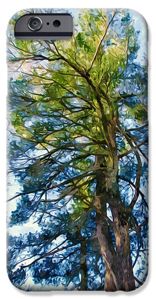 Green Day Paintings iPhone Cases - Pine tree against the blue sky iPhone Case by Lanjee Chee