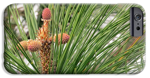 Eternal Inspirational iPhone Cases - Pine Tree Cross for Easter iPhone Case by Ella Kaye Dickey