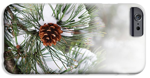 Ornament Pyrography iPhone Cases - Pine tree iPhone Case by Jelena Jovanovic