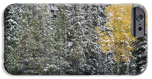 Snow Covered Trees iPhone Cases - Pine Trees In A Forest, Grand Teton iPhone Case by Panoramic Images