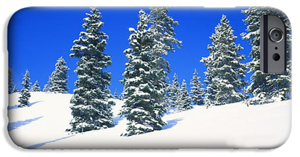 Pines iPhone Cases - Pine Trees On A Snow Covered Hill iPhone Case by Panoramic Images
