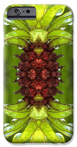 Abstract Digital Art iPhone Cases - Pineapple flower iPhone Case by Geraldine Scull