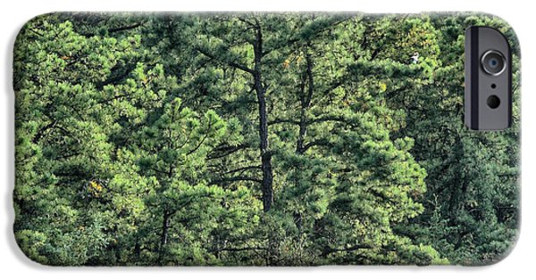 Pines iPhone Cases - Pines at Atsion iPhone Case by Dawn J Benko