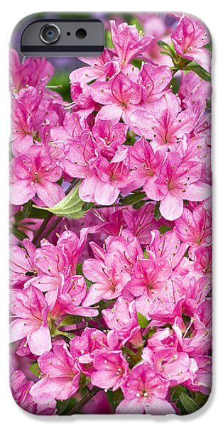 Pink And Blue Rhododendron iPhone Case by Frank Tschakert