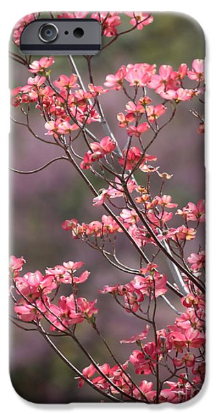 Sunlight On Flowers iPhone Cases - Pink and Purple Spring Trees iPhone Case by Carol Groenen