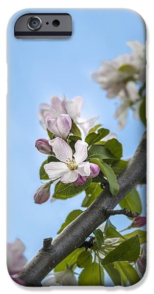 Close Focus Nature Scene iPhone Cases - Pink And White Crabapple Flowers iPhone Case by Laura Berman