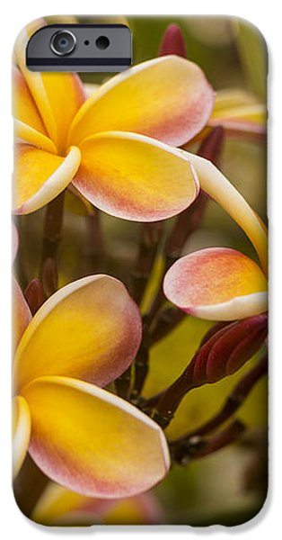 Pink and Yellow Plumeria 2 iPhone Case by Brian Harig