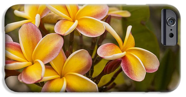 Floral Photographs iPhone Cases - Pink and Yellow Plumeria 2 iPhone Case by Brian Harig