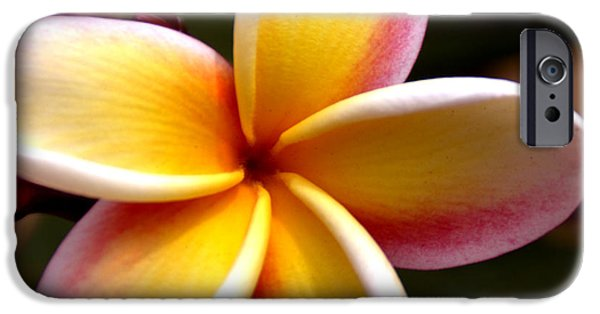 Flower Of Life iPhone Cases - Pink and Yellow Plumeria iPhone Case by Brian Harig