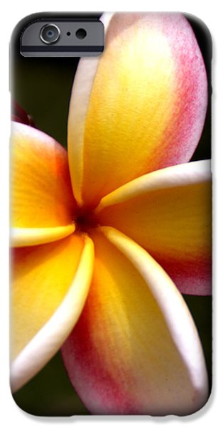 Pink and Yellow Plumeria iPhone Case by Brian Harig