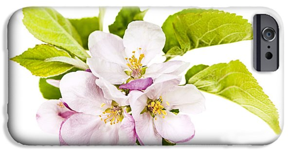 Fruit Tree iPhone Cases - Pink apple blossoms iPhone Case by Elena Elisseeva