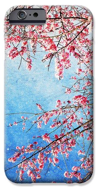 Pink blossom iPhone Case by Setsiri Silapasuwanchai