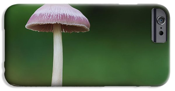 Agaricales iPhone Cases - Pink Bonnet iPhone Case by Dave Pressland/FLPA