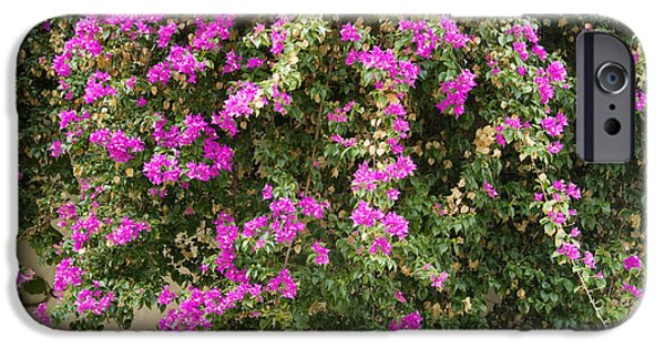 Dalt iPhone Cases - Pink bougainvillea growing on wall iPhone Case by Rosemary Calvert
