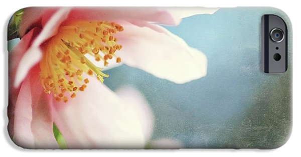 Camellia iPhone Cases - Pink Camellia iPhone Case by Sylvia Cook
