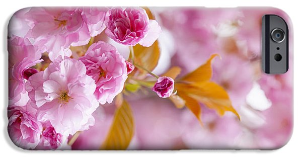 Cherry Blossoms Photographs iPhone Cases - Pink cherry blossoms in spring orchard iPhone Case by Elena Elisseeva