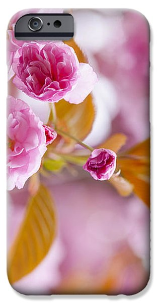 Pink cherry blossoms in spring orchard iPhone Case by Elena Elisseeva