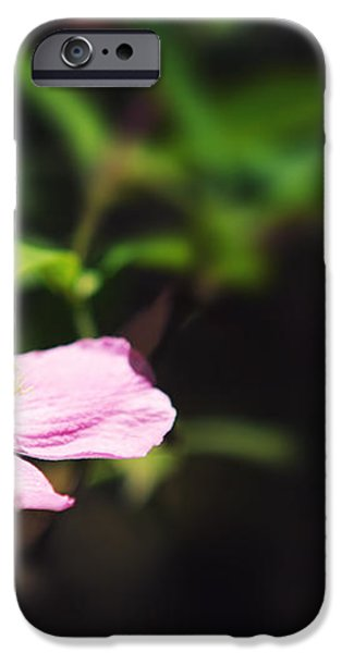 Pink clematis in sunlight iPhone Case by Jane Rix