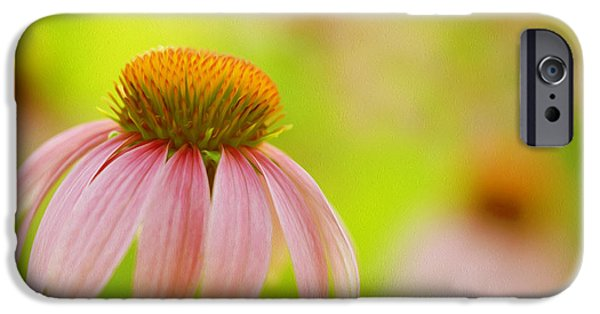 Abstracted Coneflowers Paintings iPhone Cases - Pink Coneflower iPhone Case by Lanjee Chee