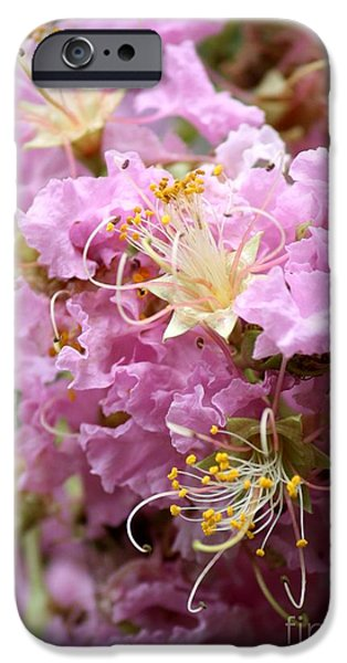 Pink Crepe Myrtle Closeup iPhone Case by Carol Groenen