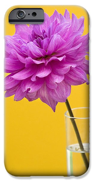 Pink Dahlia in a Vase against Yellow Orange Background iPhone Case by Natalie Kinnear