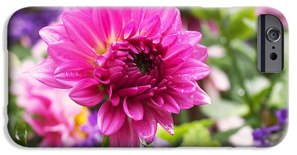 Rain iPhone Cases - Pink Dahlia iPhone Case by Rona Black