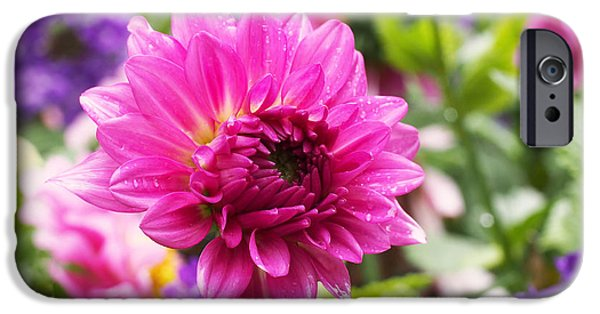 Spring Photographs iPhone Cases - Pink Dahlia iPhone Case by Rona Black