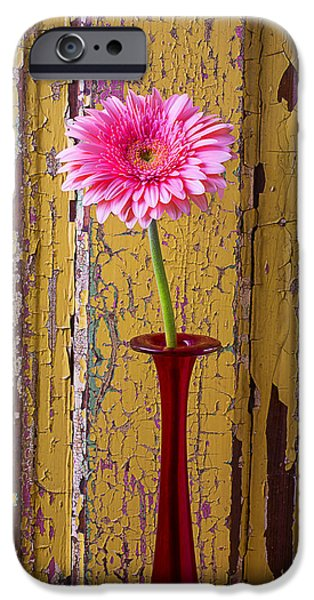 Thin iPhone Cases - Pink Daisy In Thin Red Vase iPhone Case by Garry Gay