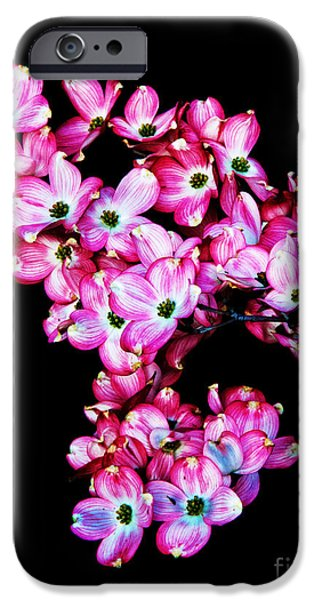Dog Iphone Case iPhone Cases - Pink Dogwood iPhone Case by Robert Bales