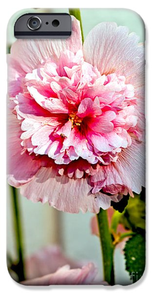 Pink Double Hollyhock iPhone Case by Robert Bales