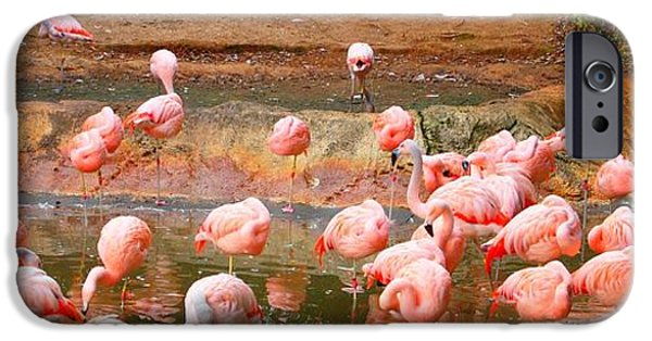 Flight iPhone Cases - Pink Flamingos Resting iPhone Case by Dan Sproul