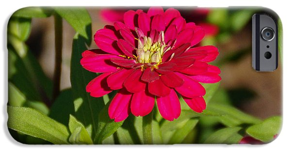 Flower iPhone Cases - Pink Flower iPhone Case by Gloria Pasko