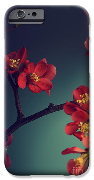 Petals Pyrography iPhone Cases - Pink Flower iPhone Case by Jelena Jovanovic