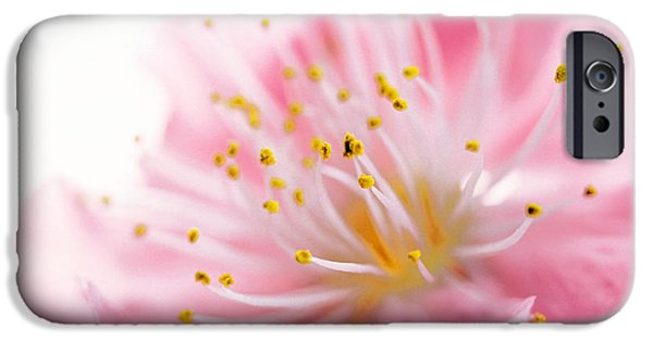 Cherry Blossoms iPhone Cases - Pink Flower iPhone Case by Panoramic Images