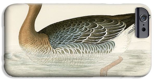 Hunting Bird iPhone Cases - Pink Footed Goose iPhone Case by Beverley R. Morris