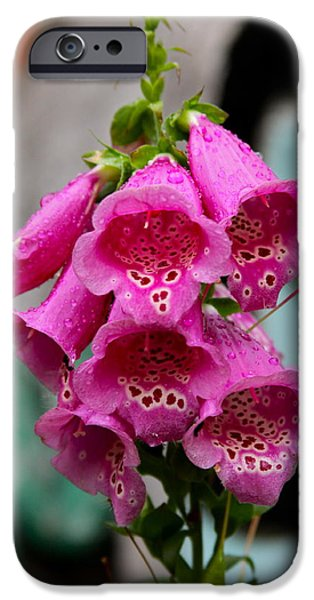 Pink Foxglove iPhone Case by Karon Melillo DeVega