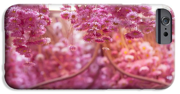 Flower Design Photographs iPhone Cases - Pink Helichrysum. Amsterdam Flower Market iPhone Case by Jenny Rainbow
