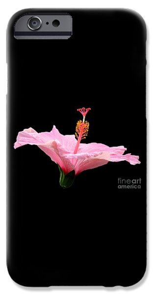 Artists4god iPhone Cases - Pink Hibiscus on Black Background iPhone Case by Rose Santuci-Sofranko