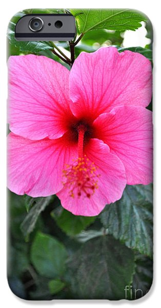 Redish iPhone Cases - Pink Hibiscus With Red Throat iPhone Case by Jay Milo